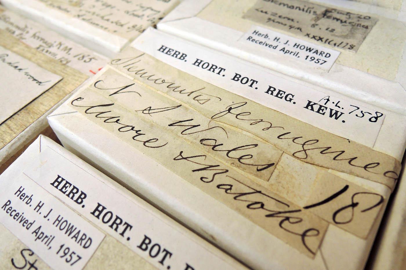 Fungarium records