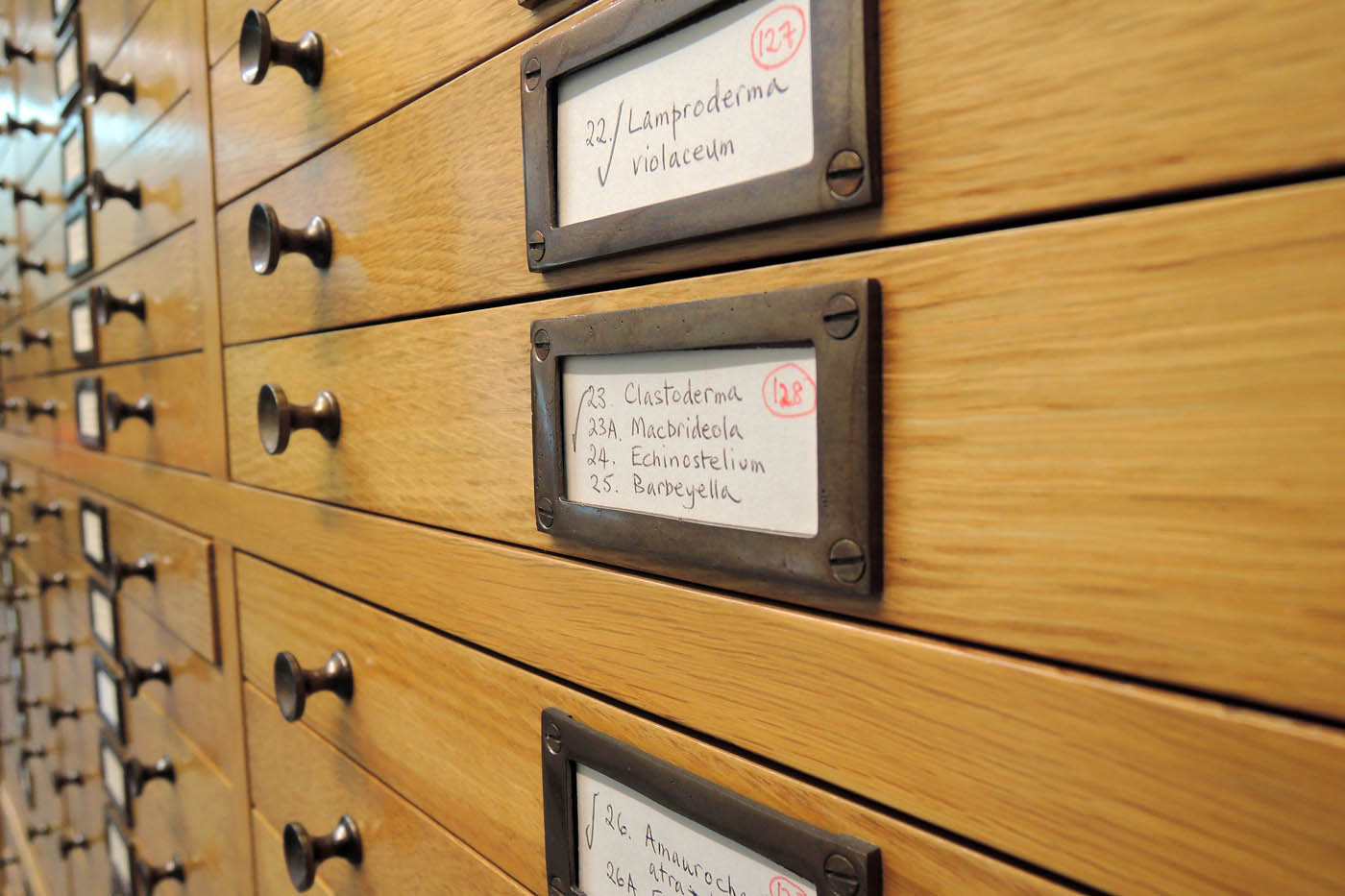Kew specimen drawers