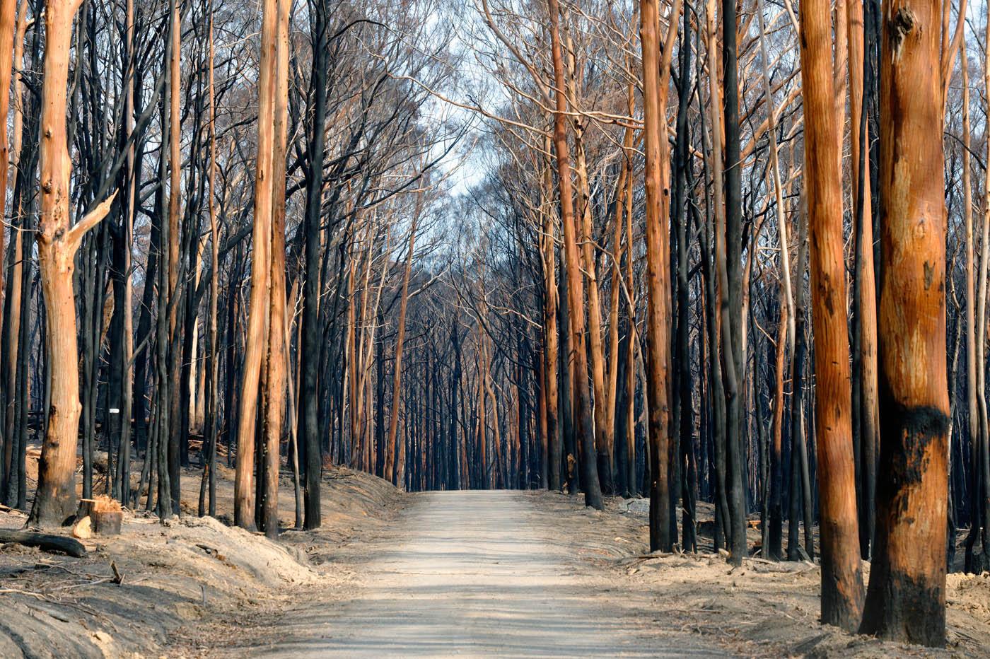 Burnt Wombat Forest
