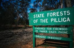 Pilliga Forest