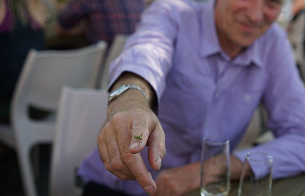 Grasshopper on Ted's finger