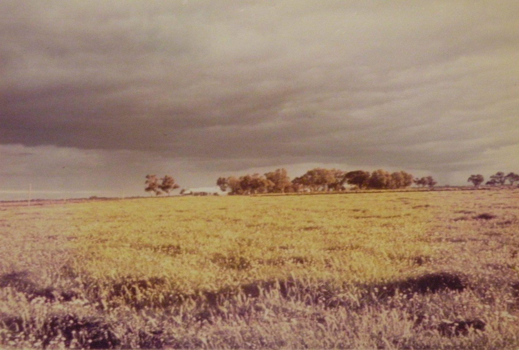 Grasses in field
