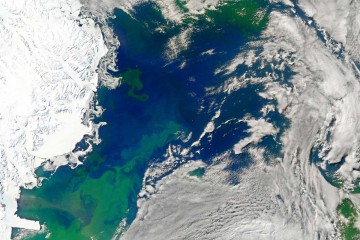Bloom in the Ross Sea. Image: NASA