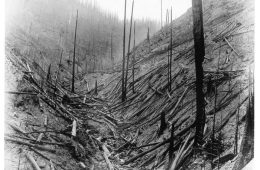 "A photo from the 1920 'Big Burn' from the Forest History Society collection. The caption: ""This is all that is left of a thrifty Lodgepole pine forest in Idaho after the 1910 fires. The author got the smoke of these fires that summer in Colorado, 800 miles away. Such burned areas must be replanted since there is no live tree for miles. """