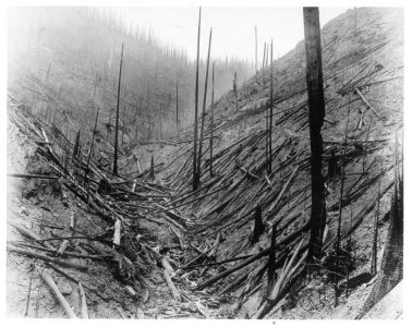 """A photo from the 1920 'Big Burn' from the Forest History Society collection. The caption: """"This is all that is left of a thrifty Lodgepole pine forest in Idaho after the 1910 fires. The author got the smoke of these fires that summer in Colorado, 800 miles away. Such burned areas must be replanted since there is no live tree for miles. """""""
