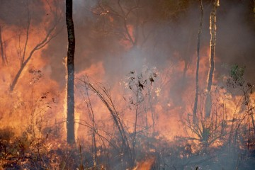 Fire in the tropics. Image: CSIRO.